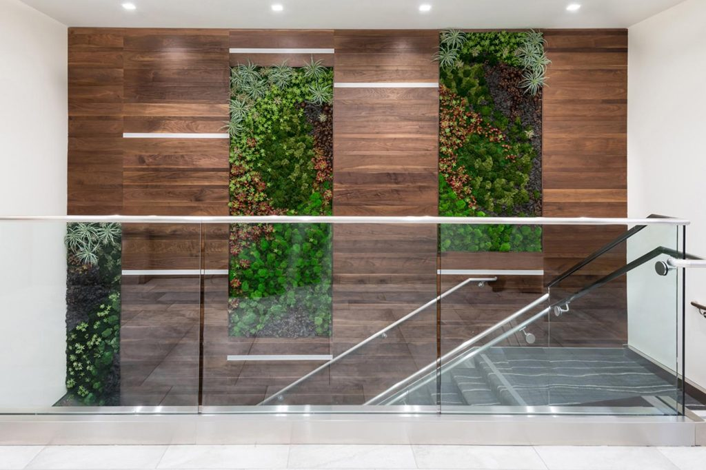 Mission Fed Green Wall for Wellness, Design by ID Studios, including feature green wall
