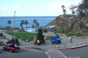 Tree Topping 2013 in Solana Beach